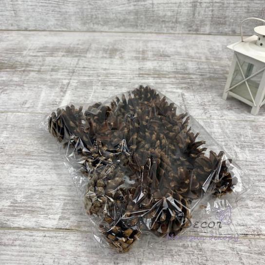 Шишка натуральная 7 см - 9 см  (упаковка 5 шт )