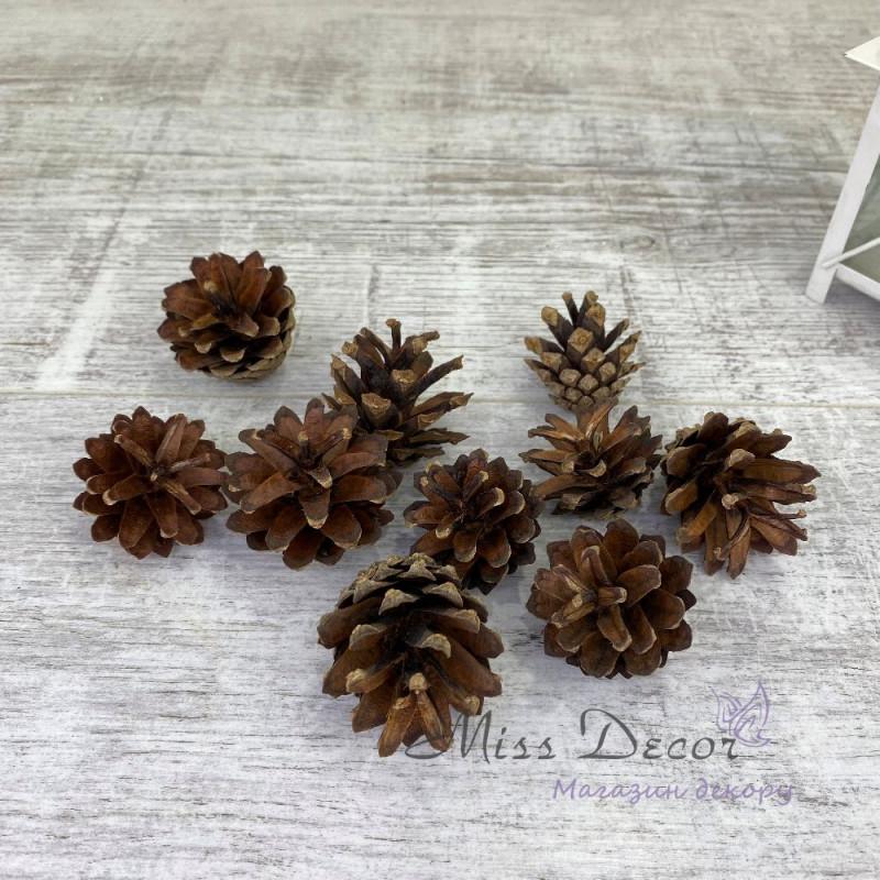 Шишки сосновая 3,5-4,5см натуральная (упаковка 10 шт)